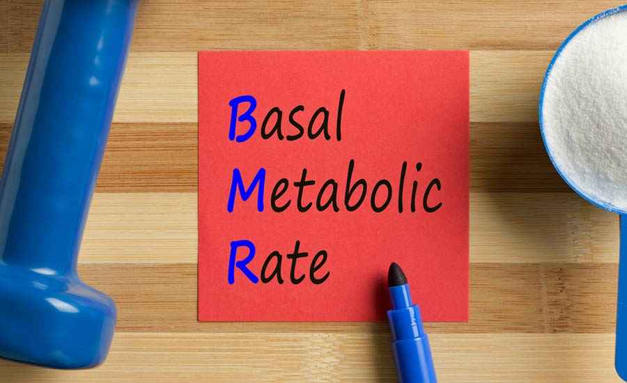 BMR means Basal Metabolic Rate